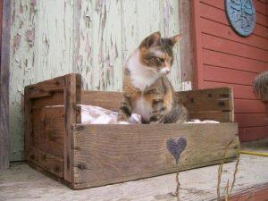 Gato e seu palete