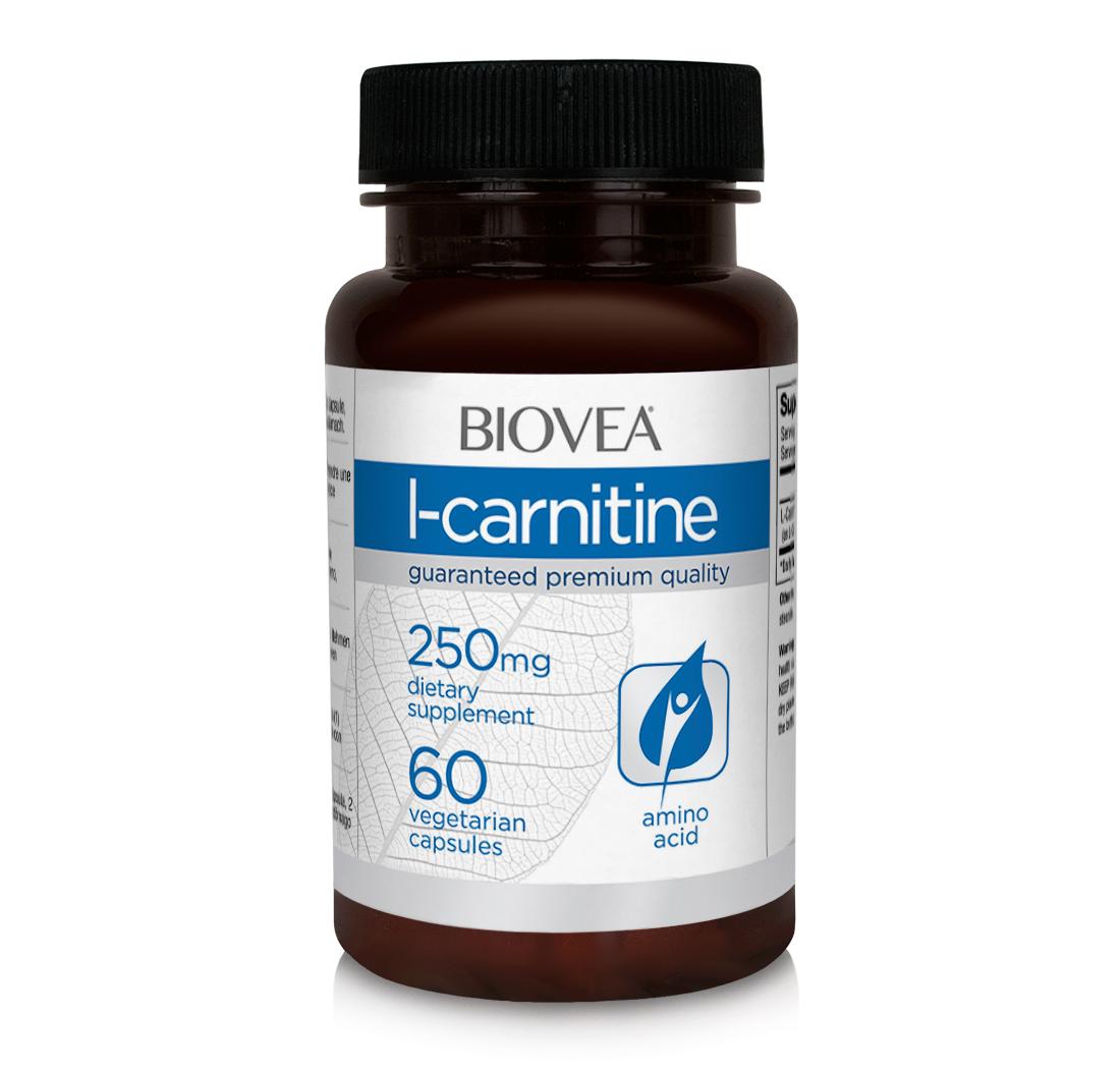 L Carnitina disponibiliza energia através da gordura