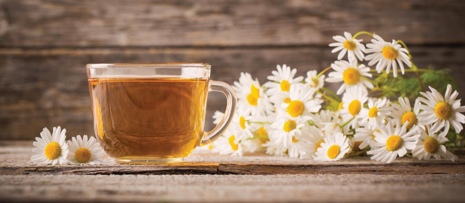 Camomila e suas propriedades como remédio homeopático