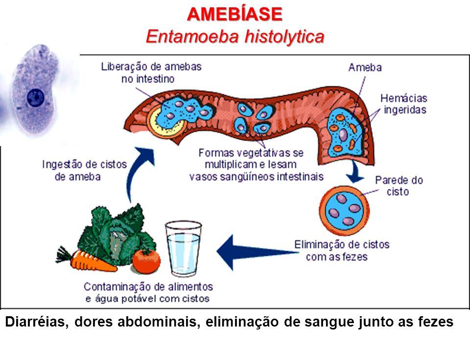 Formas de infecção da Amebíase